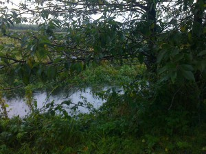 Dovers Brook behind Fouracres which over-topped September 2012