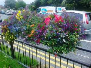 Beautiful barrier baskets on Westway.