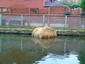 rsz_bale_in_canal_11_13