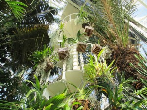 rsz_palm_house_spiral_stairs