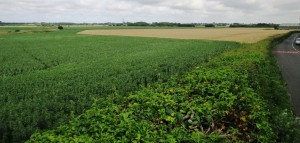 Poverty Lane can be seen on the right. Just look at the crops that will no longer be grown there if Labour has its way!
