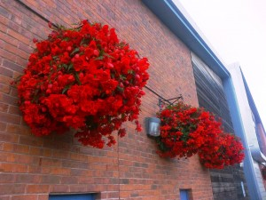 Spectacular hanging baskets on Meadows Leisure Centre.