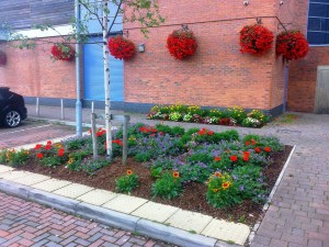 Even the car park at Meadows is in bloom.