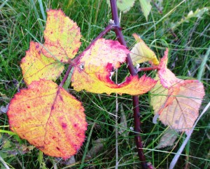 rsz_autumn_colours_in_jubilee_woods_4