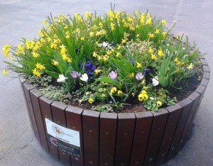 A circular prize winning flower planter on Maghull's Westway.