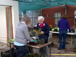 3 volunteers potting up