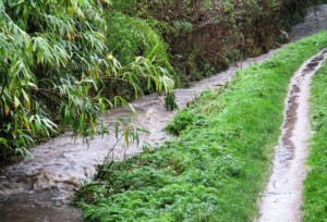 A raging Whinney Brook at Ormonde Drive, Maghull