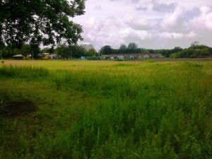This is the site looking towards the Allotments from Green Lane. It has been used as farm land in the recent past.