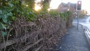 westway-hedging-cut-back-at-last-11-16